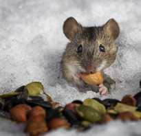 Где живут мыши зимой