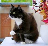 Стриженные кошки фото