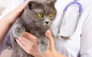 Гемобартонеллез у кошек можно ли вылечить