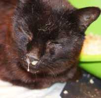 Как лечить насморк (сопли) у котенка, кошки, кота и что делать