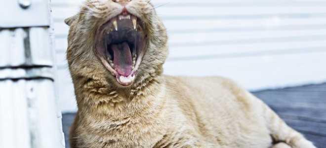 12 лучших сухих кормов для котят, разбор состава, что лучше не брать