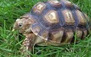 Информация о черепахах для детей