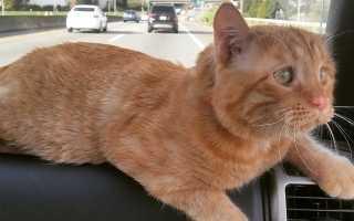 История спасения котика Бенбена от усыпления и его преображения