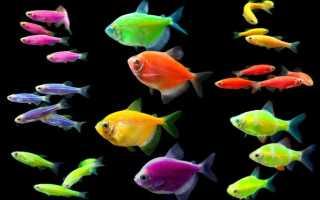 Рыбы светящиеся в темноте