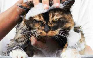 Как искупать кошку в домашних условиях