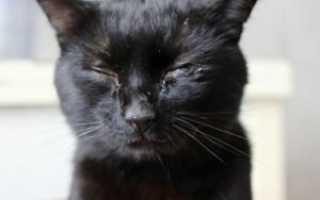 Лечение вируса у кошек