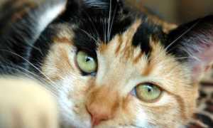 Сколько хромосом у кошки и кота: количество и принципы наследственности