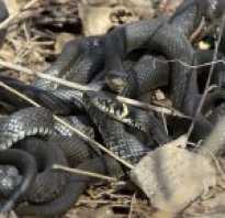 Змеи 4 класс