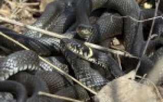 Чем покрыта змея