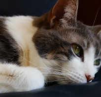 Стерилизация кошек после родов: когда и как проводить, советы