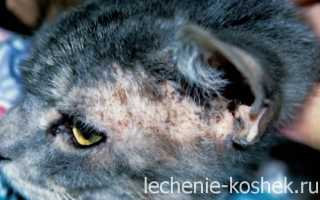 Болезни кожи у кошек фото лечение