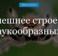 Нервная система паука