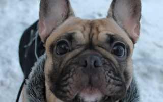Породы собак для детей с фотографиями