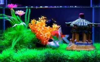 Самый маленький аквариум!