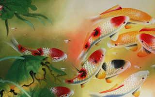 История и значение слова аквариум