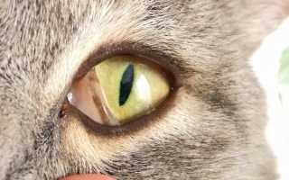 У кота глаза закрываются третьим веком