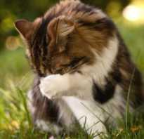Примета, связанная с тем, что кошка умывается, о чем она говорит
