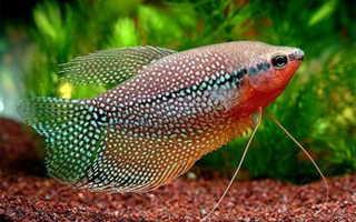 Брошюра «Решение проблем в аквариуме» от компании Tetra