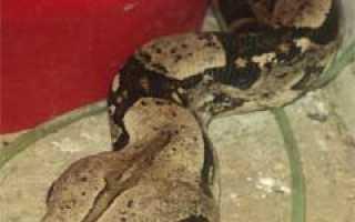 Сообщение о змеях
