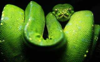 Какие змеи питаются змеями