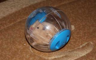 Прогулочный шар для крысы