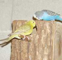 Гнезда попугаев в домашних условиях