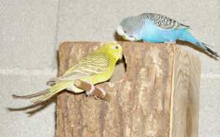 Гнездышко для попугаев