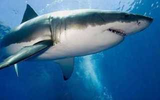 Все об акулах для детей