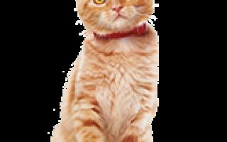 Корм Хиллс (Hill's) для кошек: полный обзор сухихи и влажных, цены