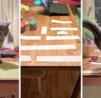 Как успокоить кошку в домашних условиях: советы, лайфхаки