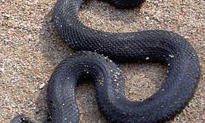 Змеи саратовской области описание фото