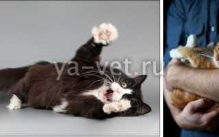 Эпилепсия у кошек: симптомы припадков, лечение в домашних условиях