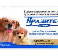 Празител таблетки для щенков инструкция
