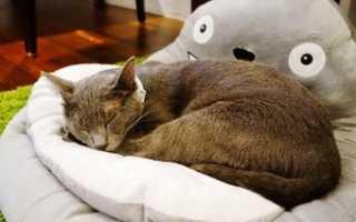 Слабительное для кошки, кота: ТОП средств в домашних условиях