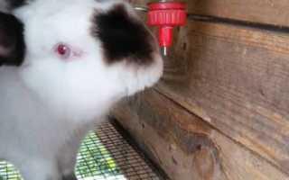 Поилка для кроликов из пластиковой бутылки