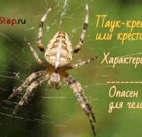 Как выглядит паук крестовик фото
