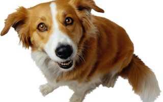 4 вида лишая у собак: как распознать и чем мазать, вакцины и прививки, как выглядит