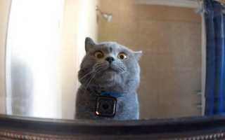 Камеры слежения раскрывают секреты котиков