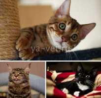У кота понос и рвота: что делать в домашних условиях, симптомы, профилактика