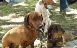 Препарат от глистов для собак