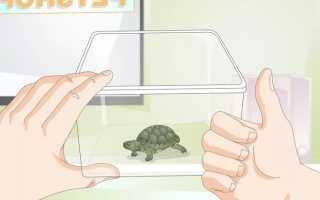 Сколько стоят домашние черепахи