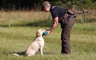 Дрессировка собаки: как научить командам апорт, сидеть, фу, нельзя, приносить предметы
