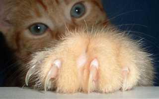 Как часто нужно подстригать когти кошкам