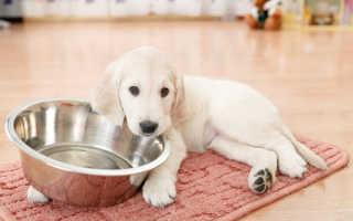 Прикорм новорожденных щенков