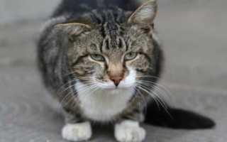 Запор у старого кота