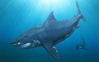 Самая большая акула за всю историю
