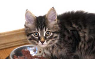 Чем кормить котят: режим, норма, советы по кормлению