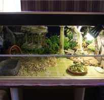 Как сделать домик для черепахи