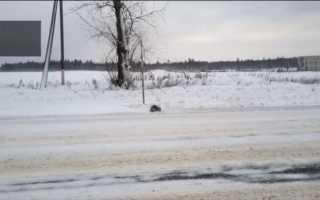 Мужчина спасает замерзшую кошку на обочине дороги