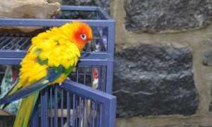 Попугай какает жидким